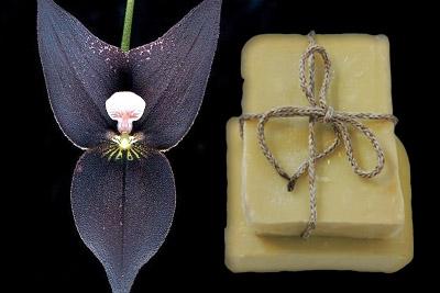 χειροποίητο σαπούνι – Μαύρη Ορχιδέα